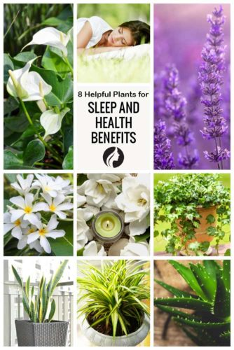 8 Helpful Plants for Sleep and Health Benefits