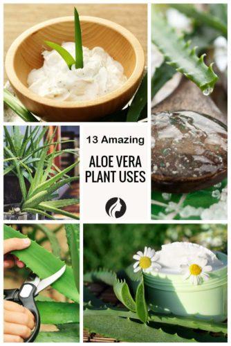 13 Amazing Aloe Vera Plant Uses