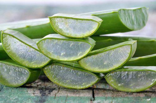 Amazing Aloe Vera Plant Uses