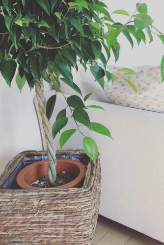 18 Best Air Purifying House Plants