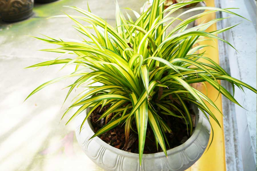 Best Air Purifying House Plants