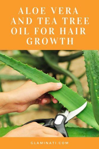 Aloe Vera And Tea Tree Oil For Hair Growth #aloevera #healthremedies