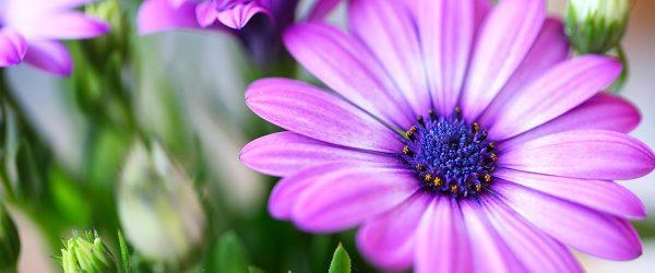 20 Best Purple Flowers for Your Garden