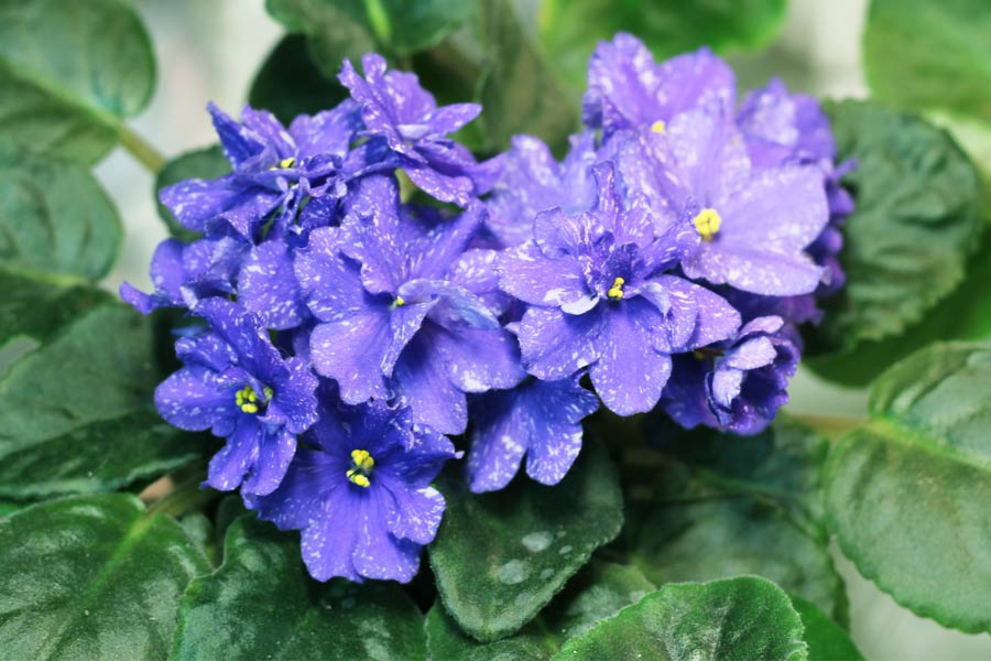 Gorgeous Blue Flowers for Your Garden
