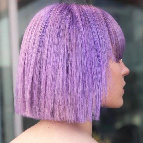 Pastel Lilac #lilachair #shorthair