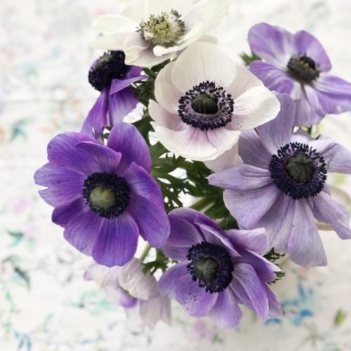 Ultra Violet Spring Flowers picture 5