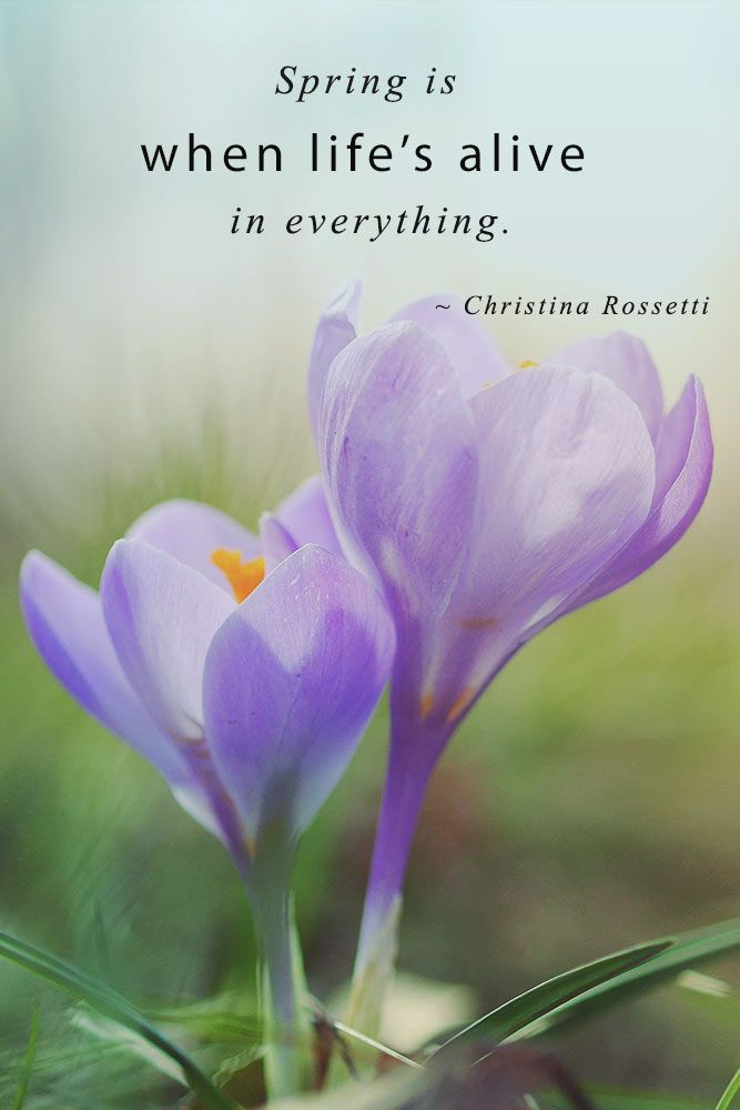 Spring Is When Life Is Alive In Everything #inspirationquotes #springmood