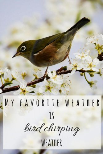 My favorite weather is bird chirping weather.