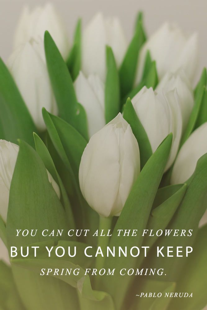 You Cannot Keep Spring From Coming #inspirationquotes #springmood