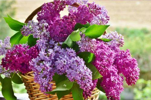 Beautiful Spring Flowers Inspired By Pantone Season Colors