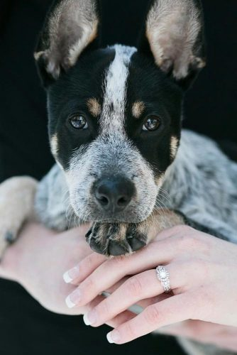 Cute Engagement Pictures With Pets picture 3