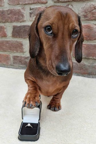 Cute Engagement Pictures With Pets: Nice Photo Idea #pets #petsmart #dogs #ring