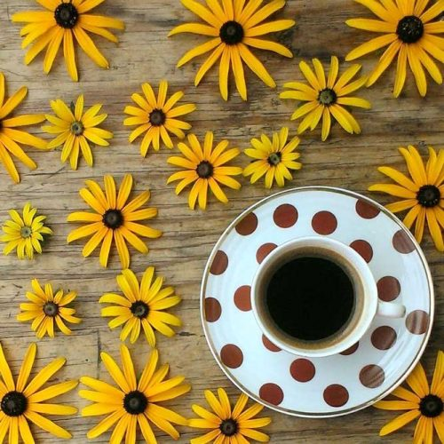 Black Eyed Susan Beauty Is In Simplicity picture 3