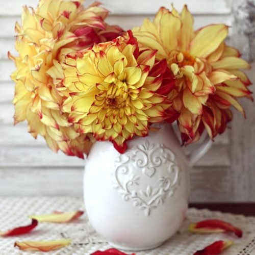 Beautiful Flowers Of Dahlia picture 3