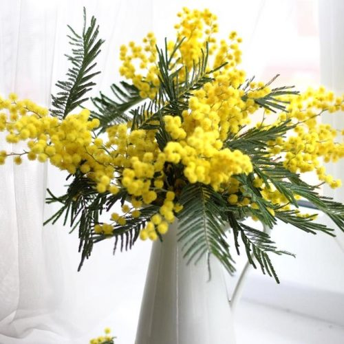 Mimosa Yellow Flowers To Feel A Harmony picture 3