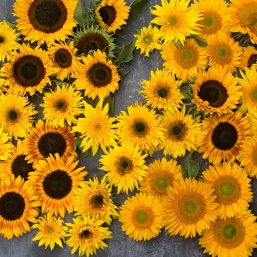Funny Sunflowers For A Nice Day picture 2