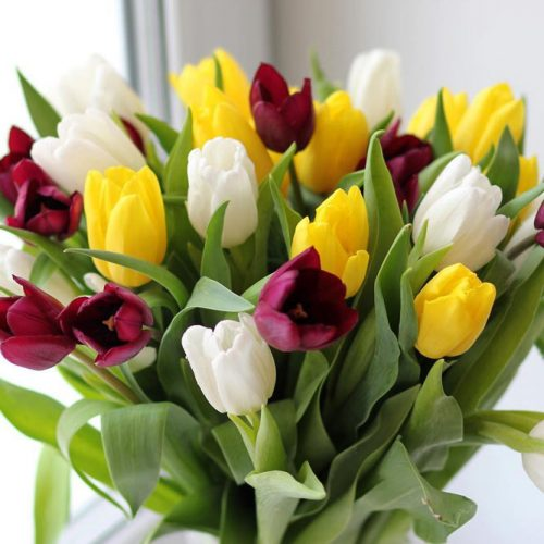 Tulip One Of The Best Yellow Flowers #tulips #yellowtulips #tulipbouquet