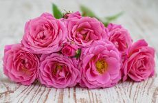 Top 24 Gorgeous Pink Flowers For Your Beautiful Yard