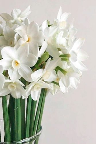 Tender White Daffodils #springflowers