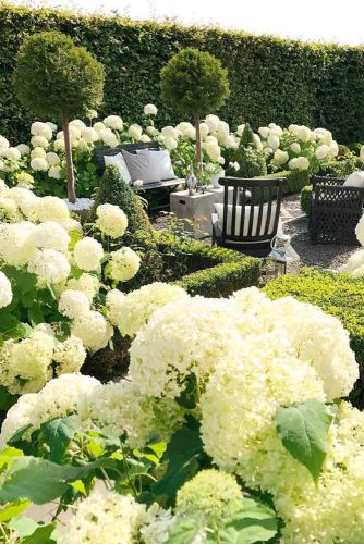 Luxurious White Hydrangea #hydrangea