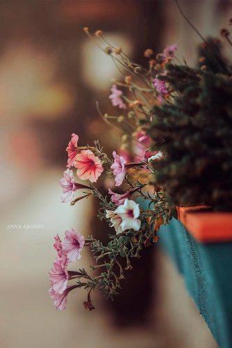 Fragrant Petunia #beautifulflowers #flowerspictures