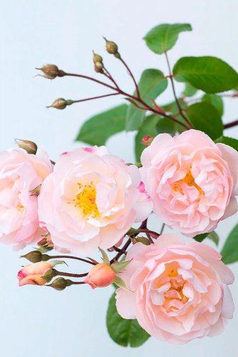 Rose – Queen Of Flowers #roses #gardenflowers