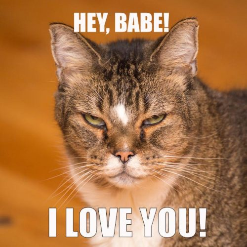 Hey, Babe! I love you! #funnymemes #lovememes #funnypicture