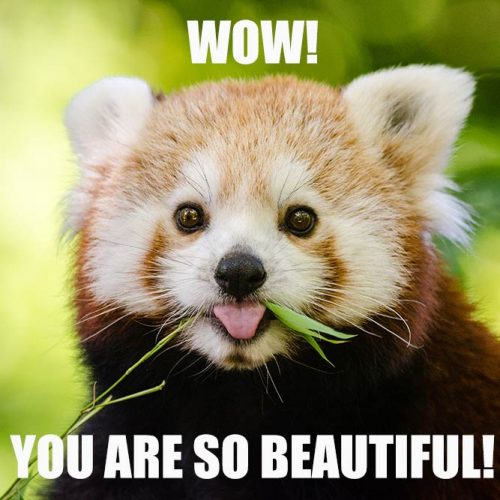 You are so beautiful! #funnymemes #lovememes #funnypicture