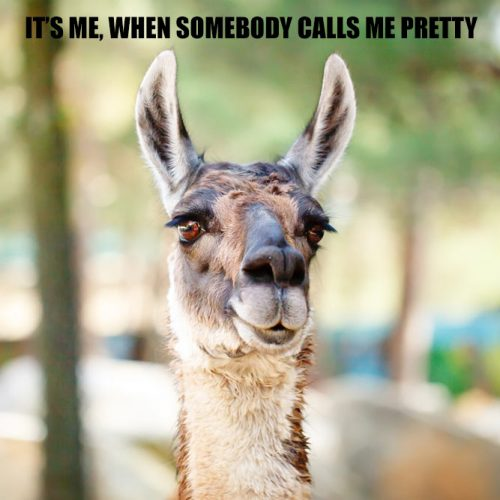 Me, when somebody calls me pretty #funnymemes #lovememes #funnypicture