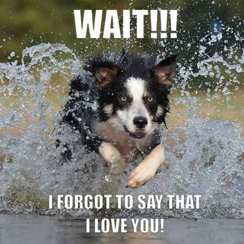 Wait! I forgot to say that I love You! #funnymemes #lovememes #funnypicture