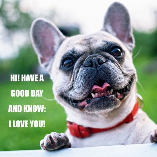 Hi! Have a good day and know: I love you! #funnymemes #lovememes #funnypicture