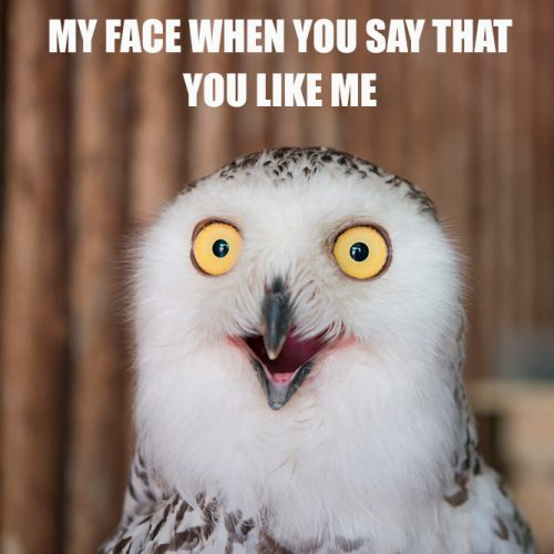 My face when you say that you like me. #funnymemes #lovememes #funnypicture