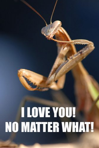 I love you! No matter what! #funnymemes #lovememes #funnypicture