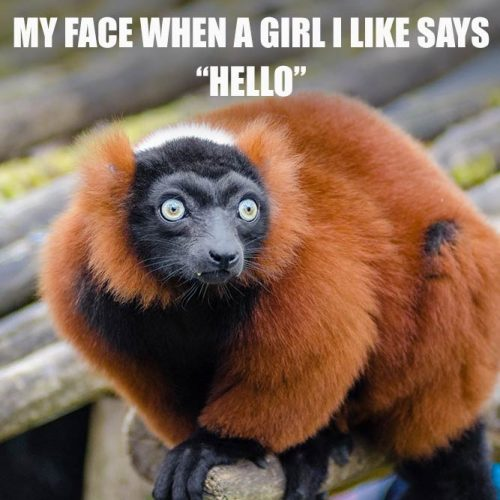 My face when a girl I like says Hello #funnymemes #lovememes #funnypicture