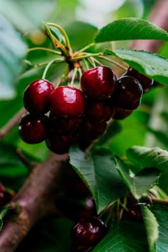 Black Cherry Helps Post-Workout Recovery #beautytips #healthandbeauty