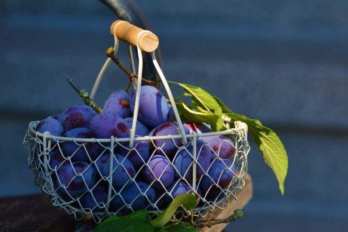 Extraordinary Plum Benefits You Need To Be Aware Of