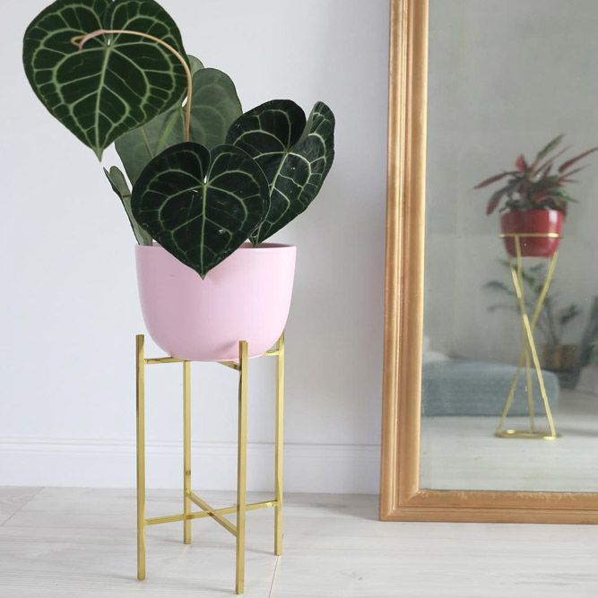 Simple Gold Metal Plant Stand #goldmetalplantstand