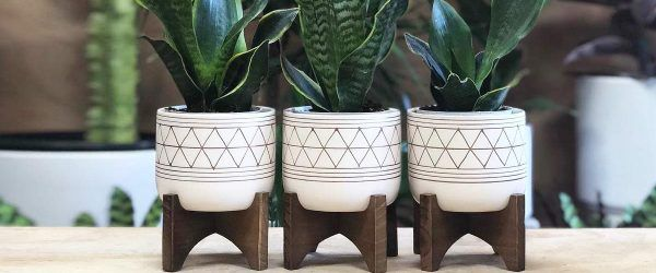 18 Exclusive Plant Stand Ideas To Introduce Into Your Interior