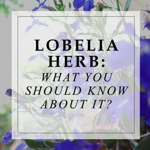 What You Should Know About Lobelia? #herbal #healthylife #flowers