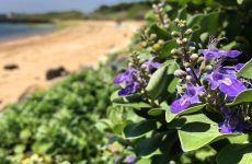 Amazing Vitex Flower And Its Power