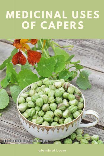 Medicinal Uses Of Capers #medicaluses #capersusers