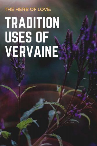 The Herb Of Love: Tradition Uses Of Vervaine #herbal #healthylife