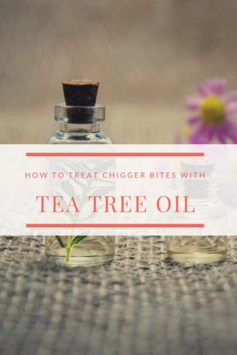 Chigger Bite Treatment With Tea Tree Oil #health #chiggers