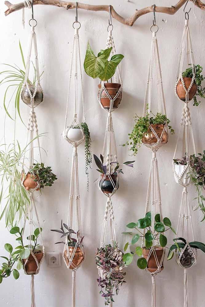 Macramé Plant Wall Branch Hanger #macramehanging